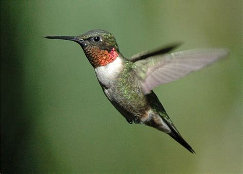 what hummingbirds can teach us about social media