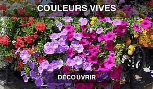 Jardiniere Fleurie Plein Soleil : fleurs retombantes pour jardini res plein soleil fleurs ~ Melissatoandfro.com Idées de Décoration