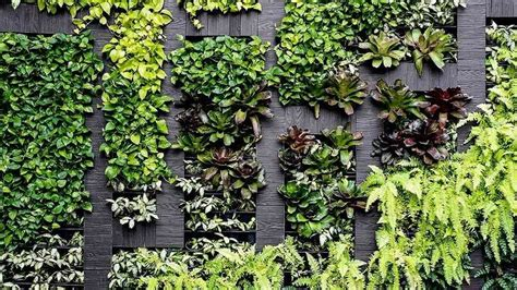 Can You Grow In A Vertical Garden by How To Grow A Vertical Garden At Home Choice