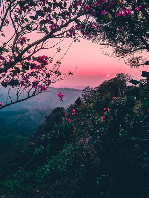 pink skies  trees  flowers image  stock photo