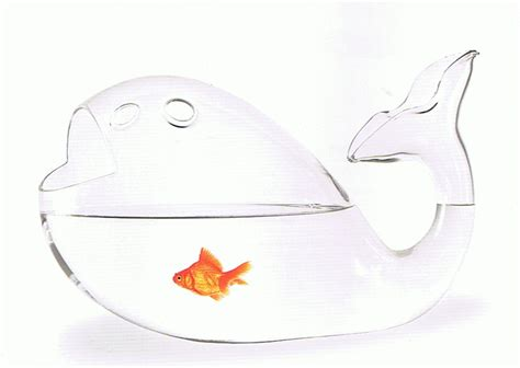 photo d 233 co bocal poisson