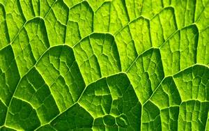 Leaf pattern wallpaper catalog of patterns