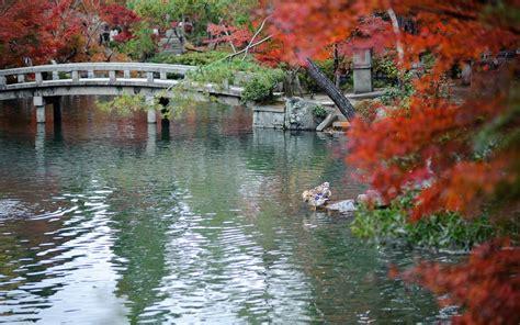 japanese autumn landscape wallpapers  images