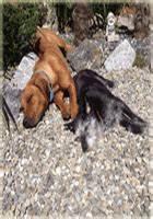 Hunde Größe Berechnen : ii ii hundebett gr e richtige gr e finden jetzt berechnen ~ Themetempest.com Abrechnung