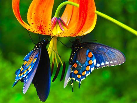 Butterfly Wallpaper Screensaver 10994 Wallpaper