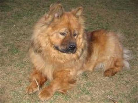 unreal corgi dog cross breeds youve
