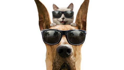Cool Cat With Glasses Wallpaper Wallfocus Com Cool Cat And Dog Hd Wallpaper Search Engine