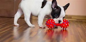 best dog toys 2018 our huge review of top 20 best toys With best dog toys for dogs that chew