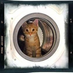 Laver Un Chaton : un chaton survit apr s un passage dans la machine laver ~ Nature-et-papiers.com Idées de Décoration