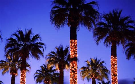 houses with christmas tree lites in palm springs palm trees decorated with lights palm springs california usa picture 13 holidaylights5