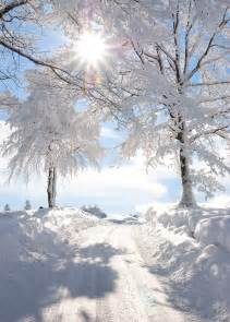 1000 ideas about snow covered trees on winter snow snow and winter landscape