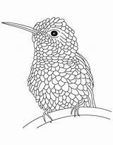 Hummingbird Coloring Pages Bird Hummingbirds Drawing Hard Humming Realistic Line Textured Adults Flowers Printable Print Drawings Getdrawings Hovering Popular Getcolorings sketch template