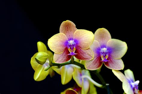the orchid orchids and dandelions strange violin music