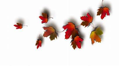 Autumn Leaves Madonna Themes Wallpapers Side