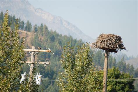 birds  powerlines
