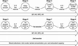 Schematic Representation Of Experimental Protocol