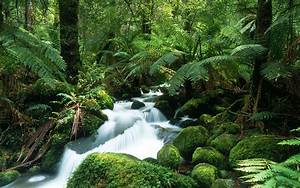 Tropical Rain Forest New High Definition Wallpapers Cool Tropical Rainforest Pictures Wallpaper ...
