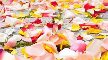 Petals Rose Wallpapers Flowers 4k Screen Flower