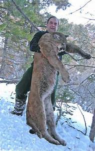 Record Mountain Lion, New Mexico   Hunting