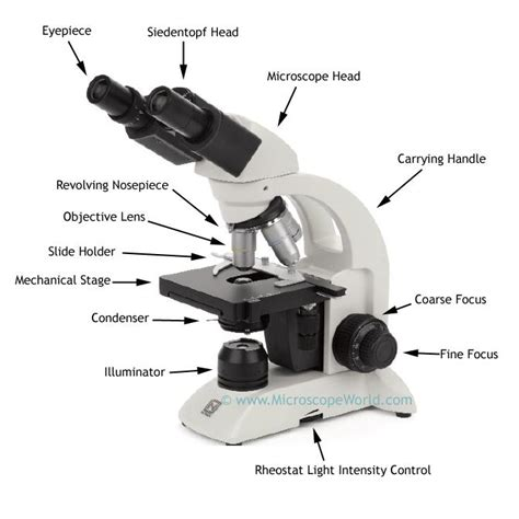 light microscope definition practical biology 211 with boury at iowa state