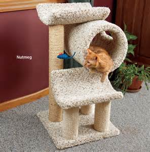 cost of declawing a cat realistic cat declaw cost kitten carpet furniture