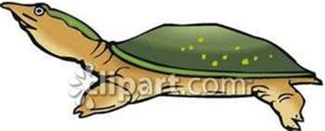 Large Snapping Turtle Royalty Free Clipart Picture