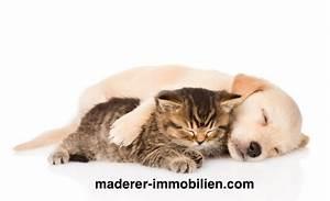Vermieter Verbietet Hund : hundehaltung in der mietwohnung erlaubt wir kl ren auf ~ Lizthompson.info Haus und Dekorationen