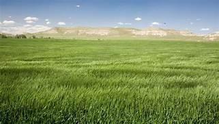 What is a grassland ec...