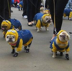 Minion French Bulldogs