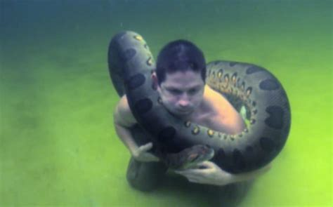daredevil swims  massive ft long anaconda caters