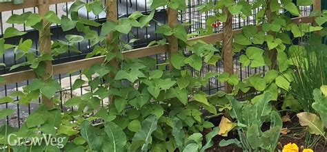 What Can You Grow In A Vertical Garden by Vertical Gardening Grow More In Your Garden