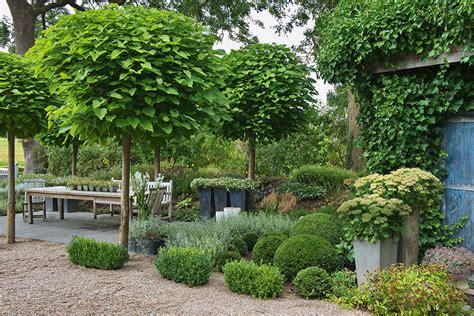 baum kleiner garten kleiner baum vorgarten schatten wohn design