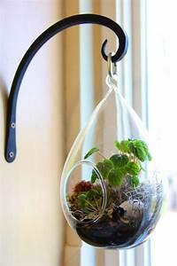 Fensterdeko Hängend Selber Machen : wie baue ich ein terrarium pflanzen und passende glasgef e ~ Markanthonyermac.com Haus und Dekorationen