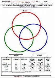 Animal Classification Triple Venn Diagram By Miss B Busy