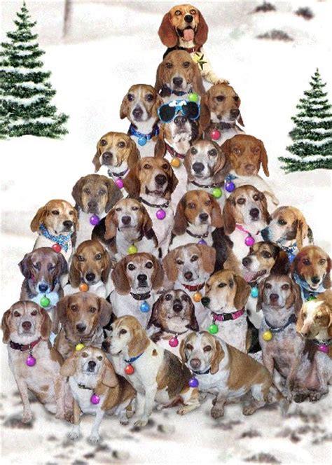 beagle rescue usa beagle christmas tree