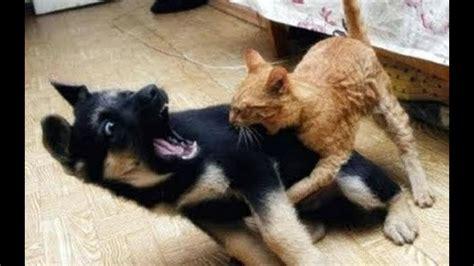ninja cats  dogs  wins phoenix sun
