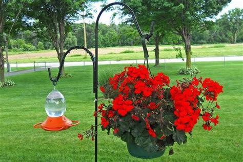 1000 ideas about best bird feeders on pinterest bird