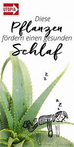Zimmerpflanzen Für Schlafzimmer : 4 zimmerpflanzen die gesunden schlaf f rdern ~ A.2002-acura-tl-radio.info Haus und Dekorationen