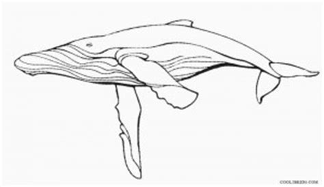 printable whale coloring pages  kids coolbkids