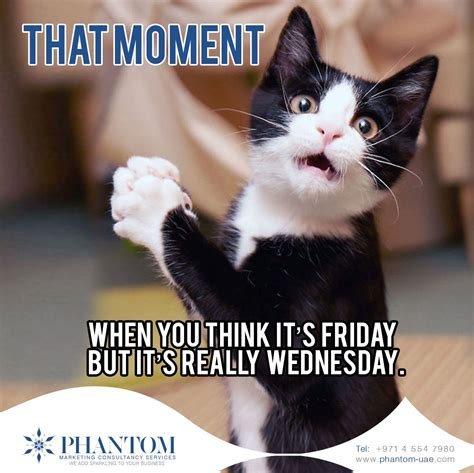 moment  wednesday  friday meme pictures