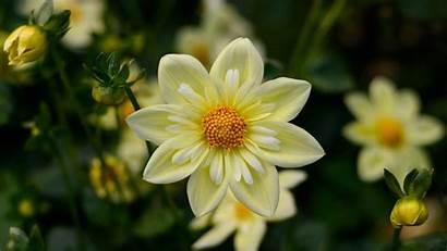 4k Desktop Flower Wallpapers Flowers Ultra Yellow