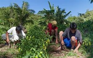 From 'Banana Republic' to Thriving Barangay   TVI ...