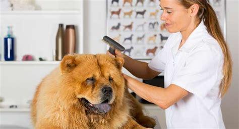 comment devenir toiletteur pour chiens maformation
