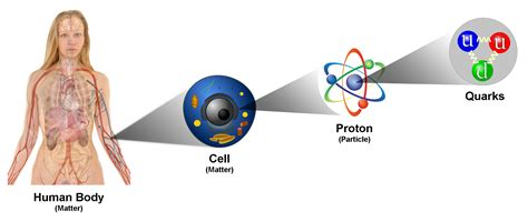 Proton Quarks by Scientists Discover New Type Of Fusion Reaction Merging