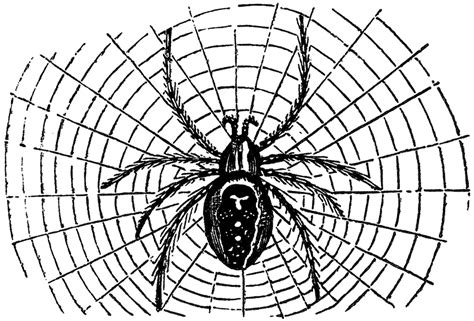 clipart web vintage spider image the graphics