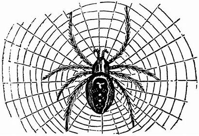 Spider Halloween Clipart Clip Spiders Web Graphics