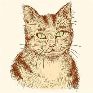 Portrait Of Hand Drawn Tabby Cat. Stock Vector ...