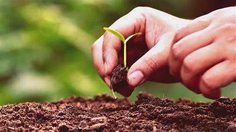 Planting, Seeding, Seedling, Close Up Male Hand Planting