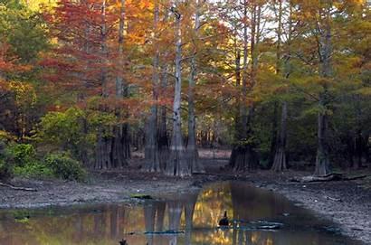 Arkansas Swamp Devils Nowhere Middle Winter Island