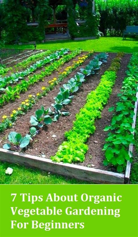 Gardening For Beginners by 7 Tips About Organic Vegetable Gardening For Beginners